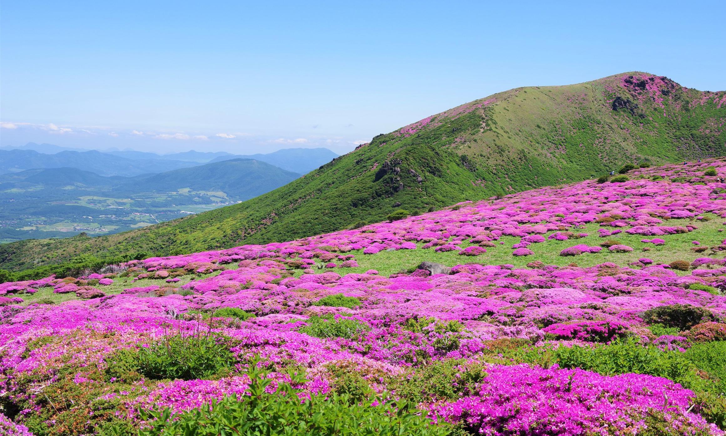 久住高原の春